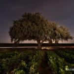 mcamposfoto_alzina_lightpainting